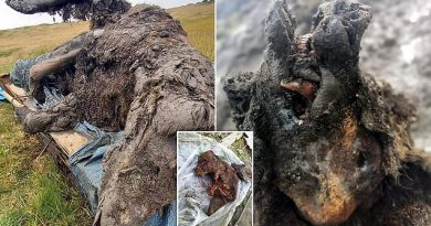 39,000-Year-Old Cave Bear Thawed Out of Permafrost in Siberia is Perfectly Preserved